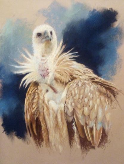 Condor Hymalaya