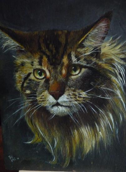 Main coon 2