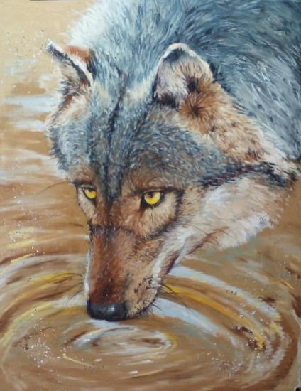 Loup au yeux jaune