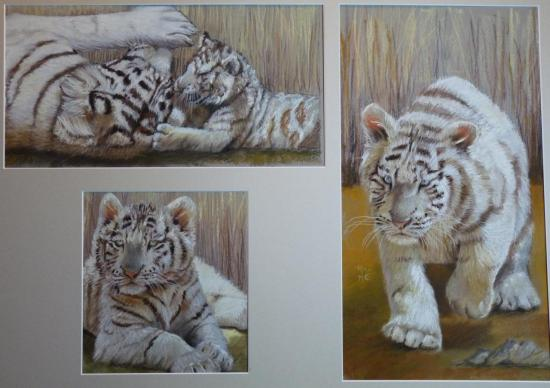 Les petits tigres blancs