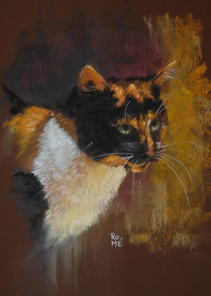 Le chat Tricolore
