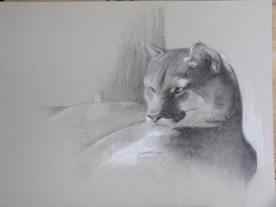 Le repos du Puma