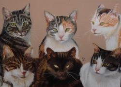 chats-de-claudine.jpg