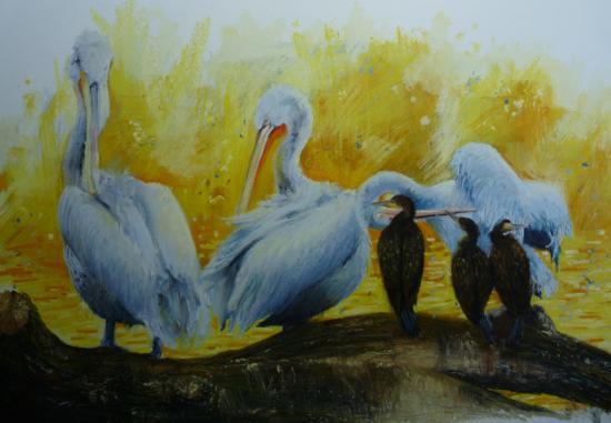 La toilette des pelicans